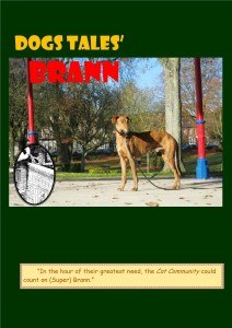 (Super) Brann, a handsome greyhound who protects his Cat friends.